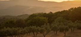 La producción Española de Aceite de Oliva