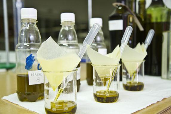 Los compuestos fenólicos del aceite de oliva virgen  – tendencias de la industria