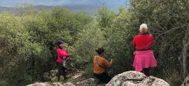 Los zumos de oliva silvestre: indómitos y muy saludables